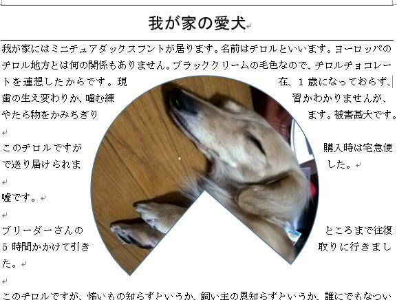 gazou_6